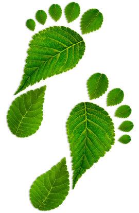 Leaf footprints